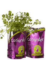 herb-growing-kit-coriander